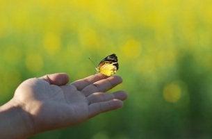 Farfalla su dito imparare a chiudere i cicli