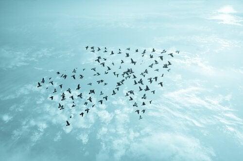 Uccelli in cielo a forma di freccia toccare il fondo