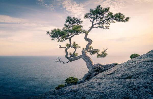 Albero sul mare