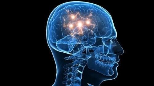 Il cervello e il fascino delle situazioni pericolose