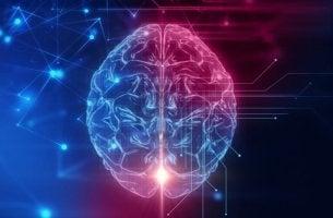 Cervello illuminato di rosso e blu