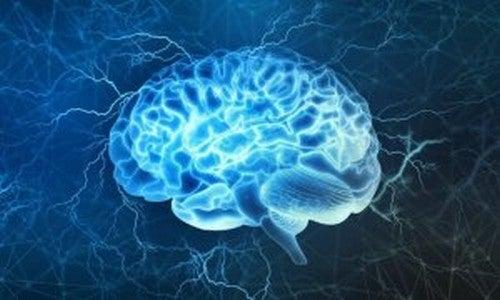 Corteccia prefrontale: interessante area cerebrale