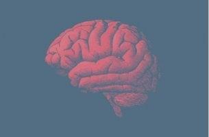 Il cervello invecchia