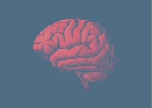 Il cervello invecchia e la risposta sta nei geni