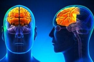 Cos'è il lobo frontale?