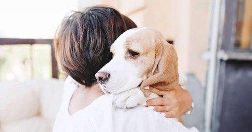 Donna e cane benefici degli animali da compagnia