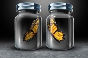 Farfalle in barattolo