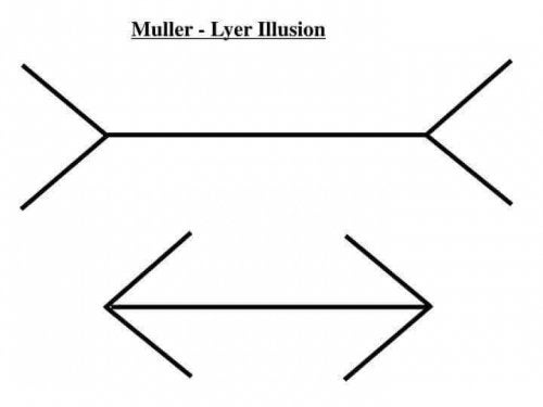 Illusione di Muller