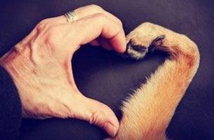 Mano e zampa a forma di cuore Affrontare la morte del proprio animale