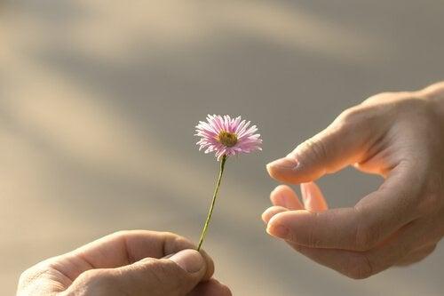 Perdonare: mano porge un fiore a un'altra mano