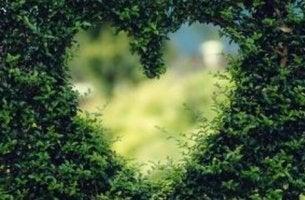 Siepe con buco a forma di cuore