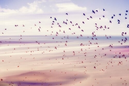 Stormo di uccelli niente ci appartiene