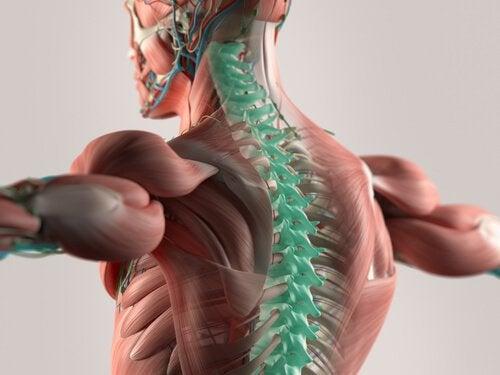 Liquido cefalorachidiano: pilastro del sistema nervoso centrale