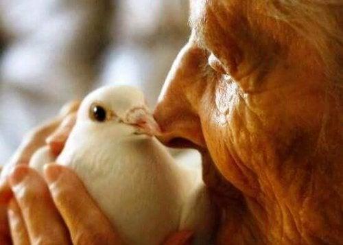 Anziana si prende cura di una colomba