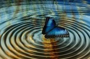 Farfalla sospesa su increspature teoria del caos