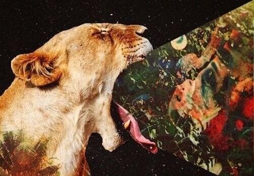 immagini che escono fuori dalla bocca di una leonessa