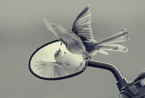 Trappole dell'ego: limite alla crescita personale