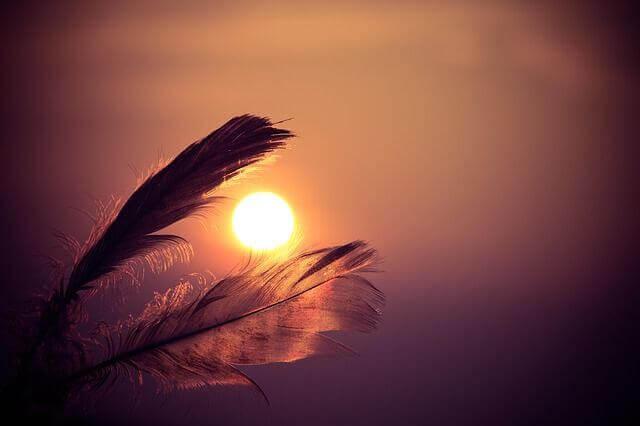 Piume racchiudono sole al tramonto