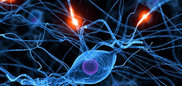Attività neuronale al microscopio