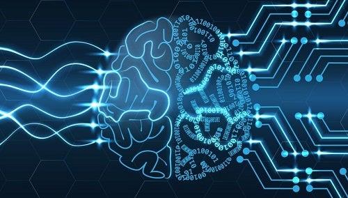Algoritmi nel cervello
