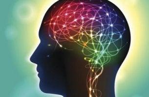 Cervello illuminato anandamide