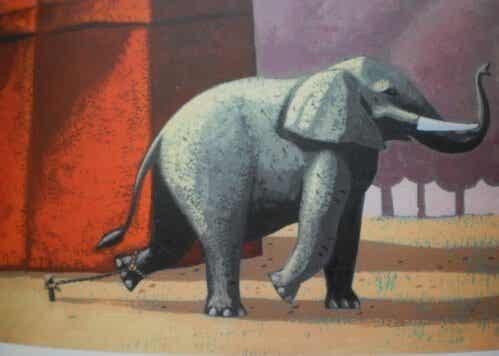 L'elefante incatenato: i fallimenti del passato