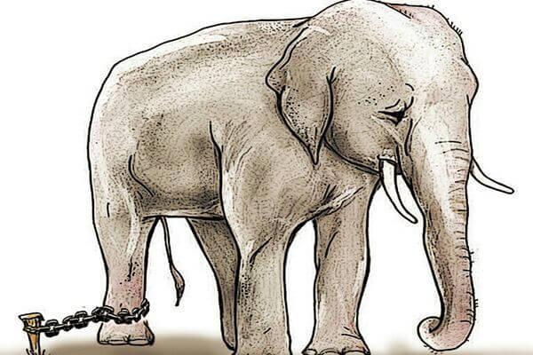 Elefante triste e incatenato