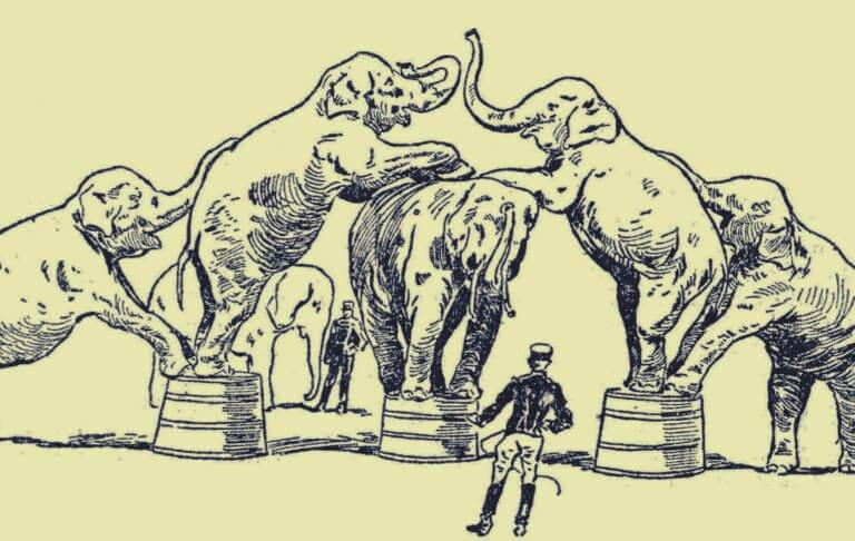 Elefanti al circo