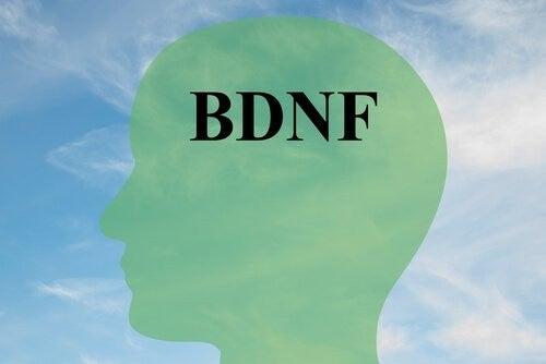 BDNF: la molecola che protegge il cervello