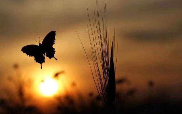 Farfalla di fronte ad alba