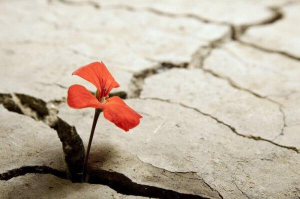 Fiore che nasce dal cemento