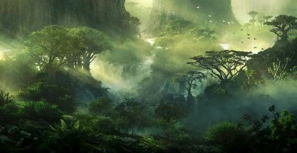 Immagine del bosco