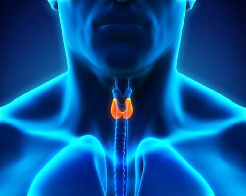Immagine del collo con in evidenza la ghiandola tiroidea