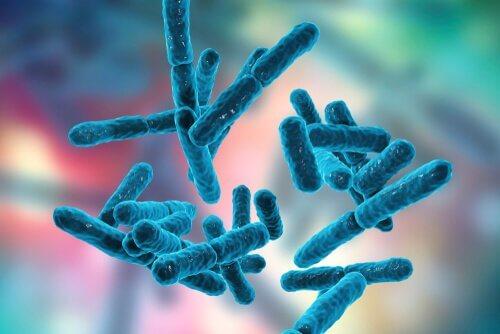 Immagine raffigurante batteri