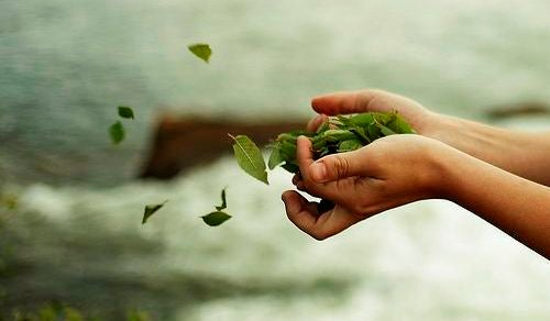 Mani con foglie