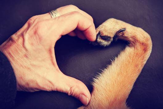 Amare un animale, mano e zampa formano un cuore