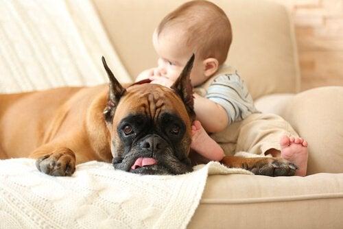 neonato accarezza un cane