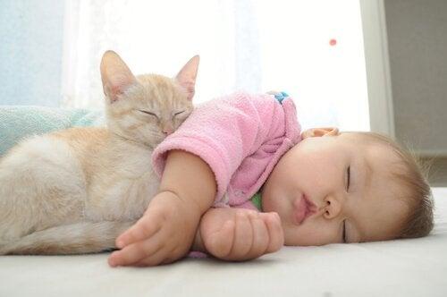 Neonato con gattino