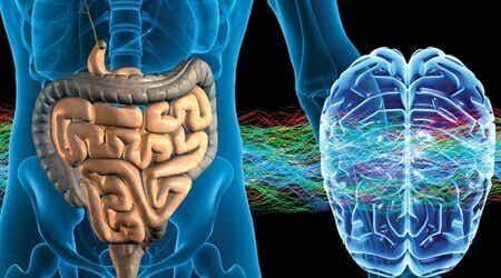 Sistema nervoso enterico, non pensa ma sente