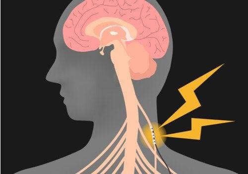 Nervo vago e sistema nervoso