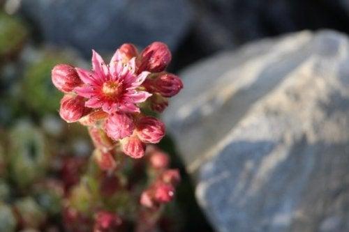 Fiore tra le rocce