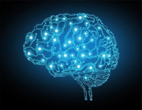 Disegno del cervello illuminato