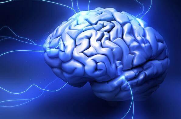 Cervello rettiliano