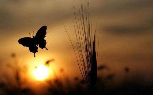 Farfalla al tramonto