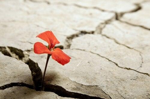 Fiore che nasce da una crepa