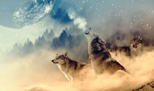 La medicina del lupo secondo gli indiani d'America