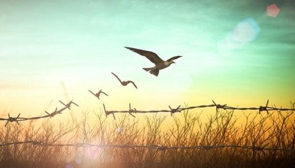 Uccello che esce da recinzione di filo spinato