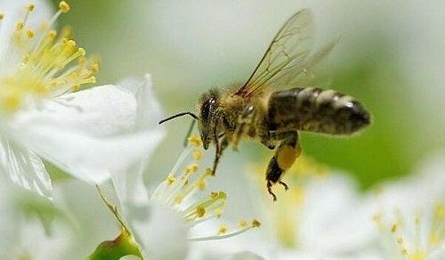 Imparare dalle api per vivere meglio?