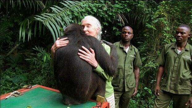 Jane Goodalla abbraccia un gorilla