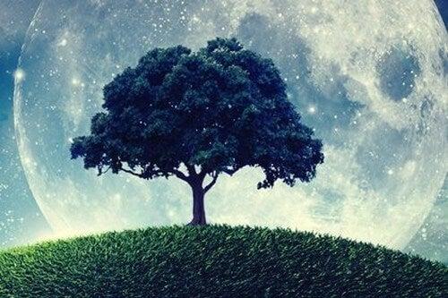 L'albero che non sapeva chi era davvero